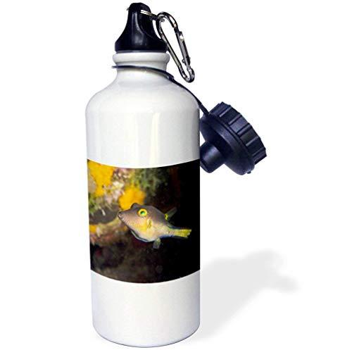 qidushop Sharpnose Puffer Fish Bonaire Nederland Antillen Witte Yoga Waterfles Isolator RVS Beker Dochter 21 oz