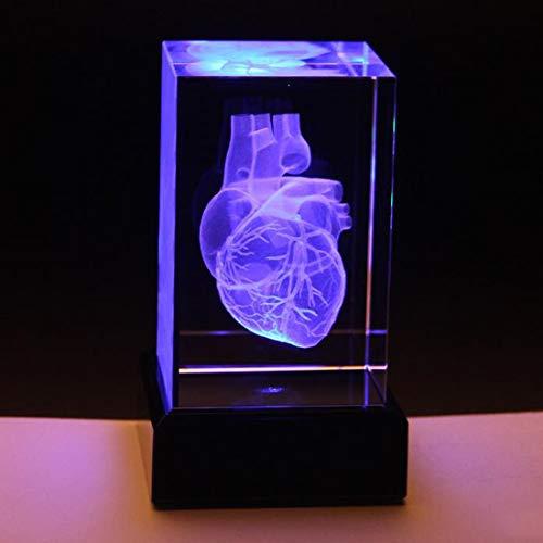 ZJM 3D Menschliches Herz-Modell, Herz Anatomisches Modell-Papiergewehr (Lasergeätzt) in Kristallglaswürfelwissenschaftsgeschenk, Mit Led Leuchtender Basis,5 * 5 * 8cm