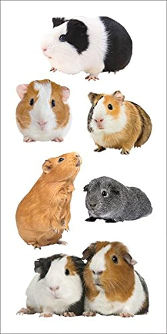 Paper House Productions ST-2237E Photo Real Stickypix Stickers, 2-Inch by 4-Inch, Guinea Pigs (6-Pack)