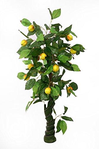 Granatapfelbaum Farbe