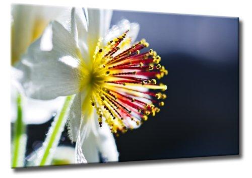 Fine-Art-Manufaktur Bild auf Leinwand Farbexplosion Größe: 70cm x 105cm | Blüte Zimmerlinde Frühling Blume Pflanze | Blüte Einer Zimmerlinde | Farbe: gelb | Rubrik: Pflanzen + Natur