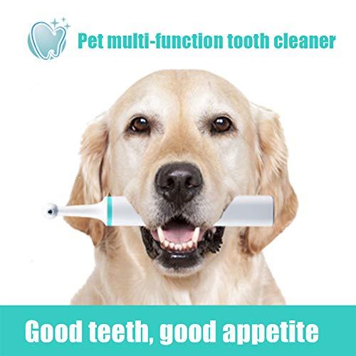 Cacoffay Multifunktions-Haustier Zähne Bleaching Poliermaschine Vibration zum Klein Mittelgroße Hunde und Katzen optimal Professionel Zahnreinigung und Dental Pflege