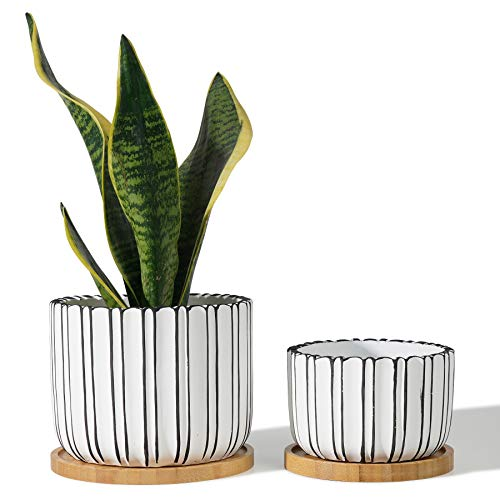 POTEY 057401 Cement Planter Pots - 5.7 + 4.7 Inch Indoor Concrete Planters Bonsai Containers with Drainage Hole & Bamboo Saucer for Plants Succulent Cactus Flowers (Set of 2, Plants NOT Included)