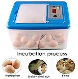 Incubadora De Huevos, Mini 32 Aves De Corral Incubadora/Incubadora, Criadero De Temperatura Digital, Aumento La Capacidad De Eclosión, Fácil De Observar