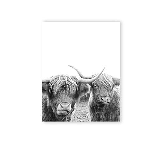 MULMF zwart-wit-gebruikte dieren Highland Cow Canvas afdrukken Schotland koe poster boerderij Nursery muurkunst schilderijen huis decoratie picture- 50X70cm oningelijst