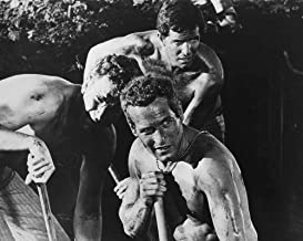 Paul Newman and Robert Drivas in Cool Hand Luke dig ditch 8x10 Promotional Photograph