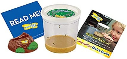 Insect Lore Cup of Caterpillars with Deluxe Chrysalis Station Live Habitat Kit Refill, Green