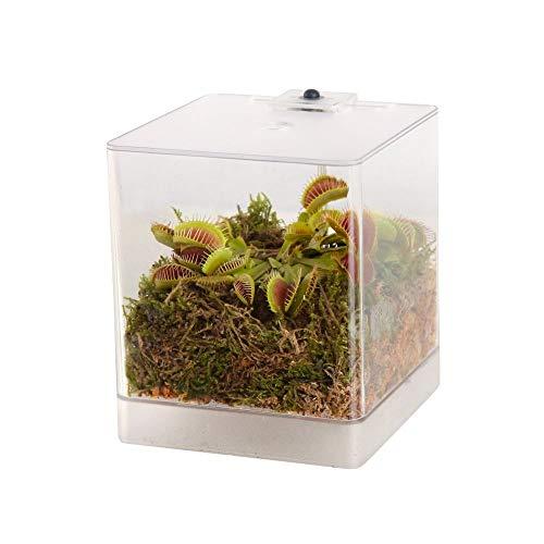 Swampworld Mini-Terrarium - Inklusive Fleischfressende Pflanze Venusfliegenfalle und Moos - Mit Beleuchtung - 12x12x15cm