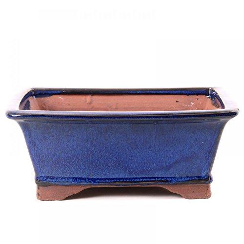 Bonsaï 22006 – Coupelle rectangulaire 21 x 16,5 x 8 cm Bleu