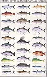 Fish identification posters for Virginia game and fish