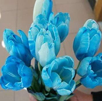 Sky Blue : 1000 PC 16kinds courtyard high-grade blue striped tulips seeds flower seed, the world's rare bonsai seeds, flowers plant, Sky Blue