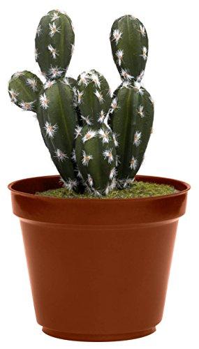 Thumbs Up cacsafe Caja Fuerte en Forma de Cactus, plástico, Multicolor, 11,5x 11,5x 23,5cm