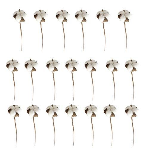 BeIilan Cotone Bianco 20pcs Gambi Fiore Secco Ramo Cotone Artificiale per Casale Decorazione di Cerimonia Nuziale