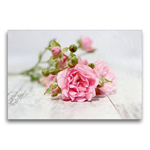 Premium Textil-Leinwand 75 x 50 cm Quer-Format Rosa Röschen | Wandbild, HD-Bild auf Keilrahmen, Fertigbild auf hochwertigem Vlies, Leinwanddruck von Heike Hultsch