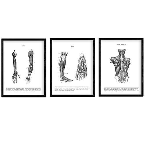 Nacnic Set de 3 Posters de anatomía en Blanco y Negro con imágenes del Cuerpo Humano. Pack de láminas sobre biología con Brazo, Pierna y Espalda. Tamaño A3. Sin Marco.