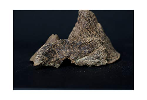 oudwoodvietnam.com Oudh Agarwood Chips Oud Chips Incense Aroma | Natural Wild and Rare Agarwood Chips from Oudwood Vietnam | Pure Material Grade A++ (1 Kg)