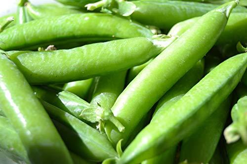 Sugar Ann Snap Pea Garden Seeds, 50 Heirloom Seeds Per Packet, Non GMO Seeds