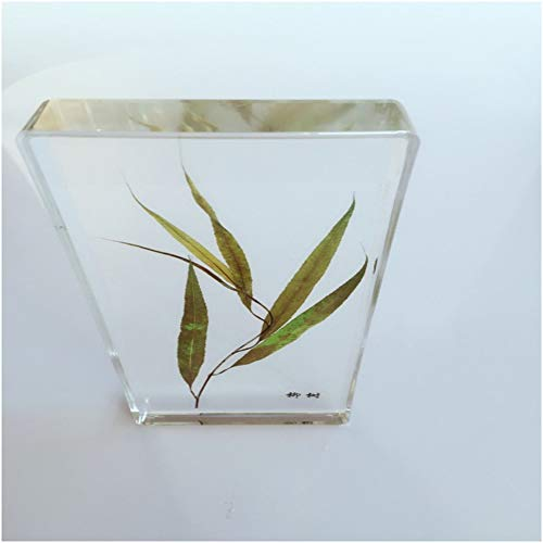 FHUILI Pflanze Eingebettete Specimen - Capsicum/Chinese Yam/Willow/Mungbohne Biologische Pflanzenproben Modell - konservierte biologische Anlage zur Briefbeschwerer,Willow
