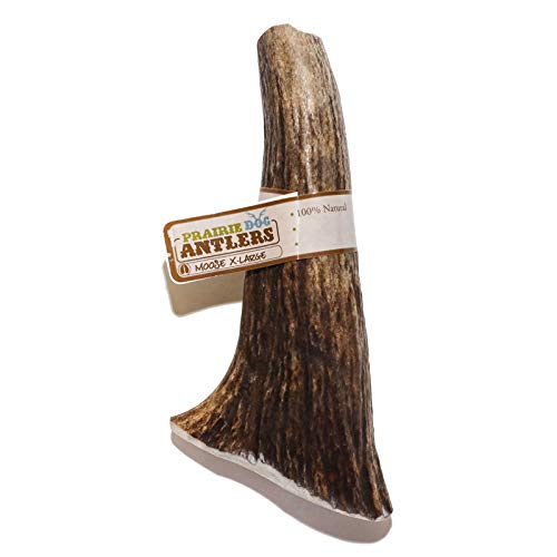 Prairie Dog Pet Products Moose Antler Treat, X-Large (Assorted Color)