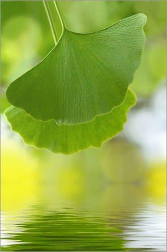 Posterlounge Cuadro de metacrilato 40 x 60 cm: Green Leaves de Atteloi