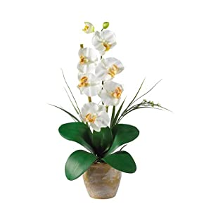 Nearly Natural 1016-CR Phalaenopsis Silk Orchid Flower Arrangement, Cream,6.75″ x 6.75″ x 22.5″