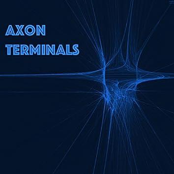 Axon Terminals