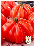 Liguria Tomato Special Selection Lycopersicon esculentum Seeds Seed Vegetables Vegetable Garden