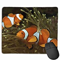 カクレクマノミ サンゴの塊 マウスパッド 運びやすい オフィス 家 最適 おしゃれ 耐久性 滑り止めゴム底付き 快適操作性 30*25*0.3cm