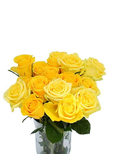 Greenchoice Flowers - Yellow Roses, Fresh Cut Flowers, Roses for Delivery, Fresh Roses, Long Stem Roses (12 Stems)