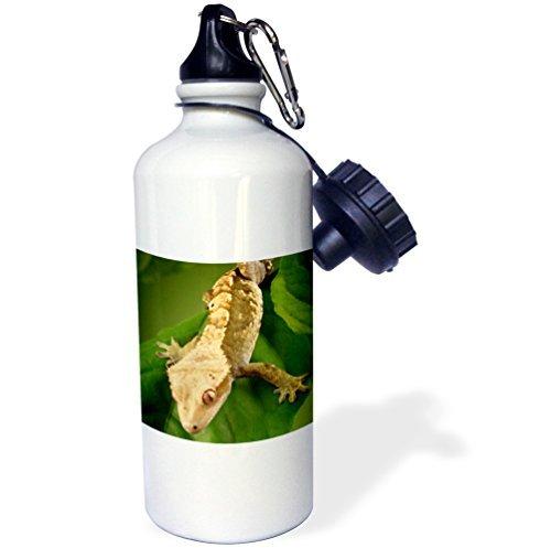 Calédonienne Huppé Gecko Lizard Sports Bouteille d'eau en acier inoxydable Bouteille d'eau pour femme homme enfants 400 ml