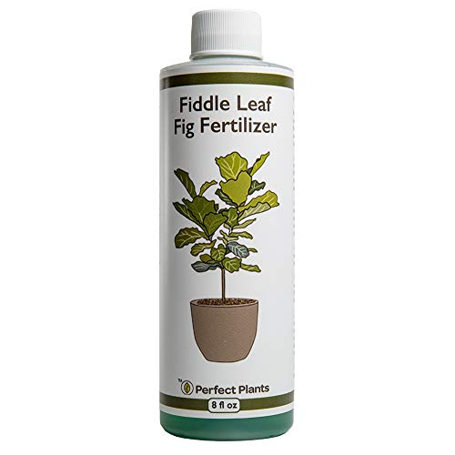Perfect Plants Liquid Fiddle Leaf Fig Fertilizer | 8oz. of Premium Concentrated Indoor Ficus Fertilizer | Use with Ficus Lyrata and Other Houseplant Ficus Varieties
