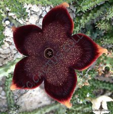 Flower with jewel-like appearance