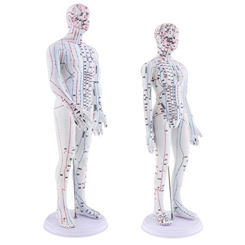 Almencla 2 Pieces 20 inches Chinese Human Acupuncture Model with Acupoints and Meridians, Female and Male