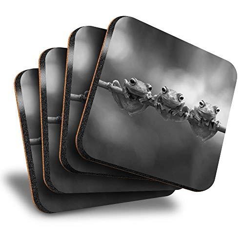 Destination Vinyl ltd Great Posavasos (juego de 4) cuadrados – BW – Rana voladora Java Rama Bebida brillante Posavasos/Protección de mesa para cualquier tipo de mesa #36805