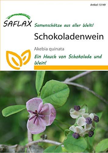 SAFLAX - Schokoladenwein - 10 Samen - Akebia quinata