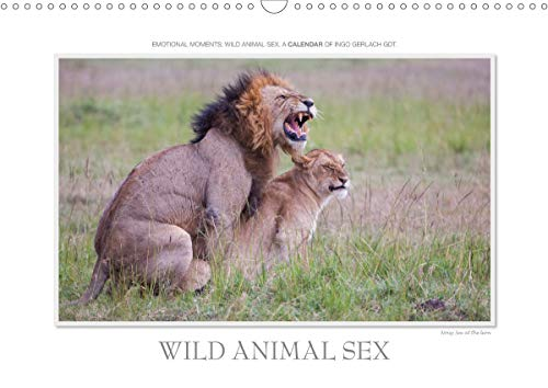 Emotional Moments: Wild Animal Sex. UK-Version (Wall Calendar 2020 DIN A3 Landscape): Ingo Gerlach GDT has chosen from his giant pool of images from ... calendar, 14 pages ) (Calvendo Animals)