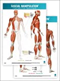 FASCIAL Manipulation 2nd Level Poster Centers of Fusion •