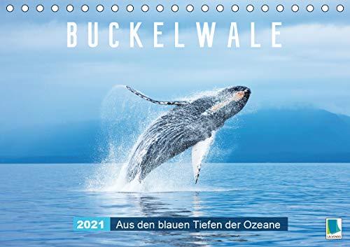 Buckelwale: Aus den blauen Tiefen der Ozeane (Tischkalender 2021 DIN A5 quer)