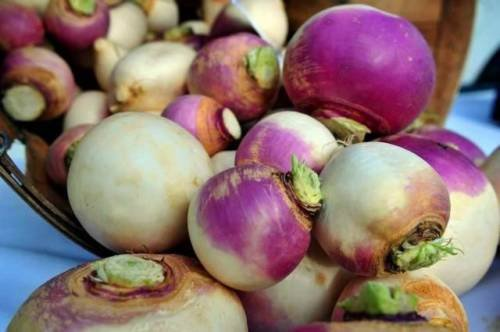 GRAINES NAVET, PURPLE TOP BLANC GLOBE, HEIRLOOM, ORGANIC, NON OGM, 100 graines