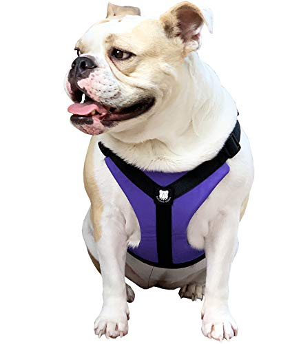 Bulldog Grade No Pull Dog Harness - Custom Fit, Reflective Vest Harnesses with Handle Designed for English Bulldogs, French Bulldogs, and American Bulldogs (Medium, Panting Purple)