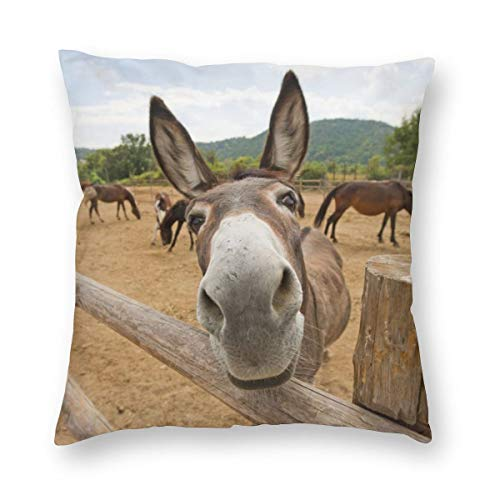 Hangdachang Funny Donkey Square Pillow Cover Pillowcase Retro Cushion Cover Double-Sided Printed 45 X 45 cm/18 X 18 Inch