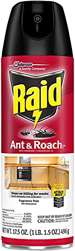 Raid Ant and Roach Killer Fragrance Free (17.5 Ounce (Pack of 1))