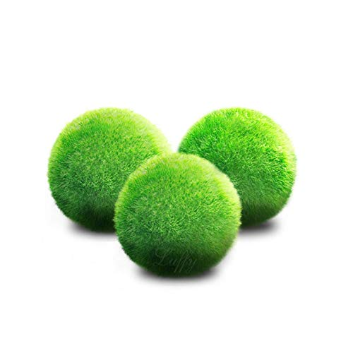 Luffy Giant Marimo Moss Balls, Aesthetically Beautiful, Create Real Ecosystem, Low-Maintenance, No Special Food Requirements, Suit All Aquarium Sizes, Shrimps and Snails Love Them, 3 Pack
