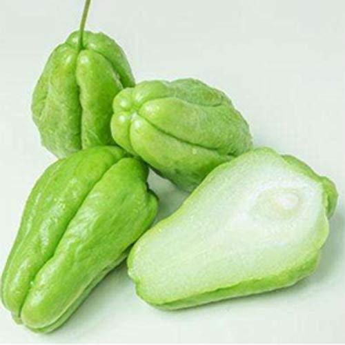 strimusimak Köstliche Chayote Bonsai Samen Nahrhafte Zierhof Hof Gemüse Grüne Pflanze Samen Garten Pflanze - 20 Stk 20 Stk