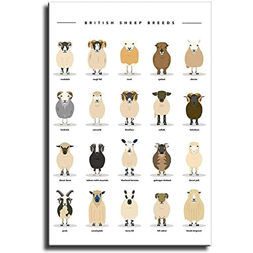 Leinwand Gemälde Bilder British Sheep Breeds Print Poster Und Wand Bilder Print Modern Kindergarten Kinderzimmer Dekor Poster Rahmenlos 30×40cm