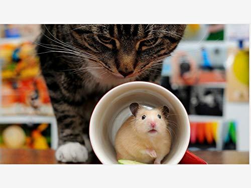 AMDPH Katzenbecher Hamster 5D Diamant Malerei Bohrmaschine DIY Mosaik Kreuzstich Strass Stickerei Wohnzimmer Dekor Wandkunst Handarbeit Kit Handgemacht