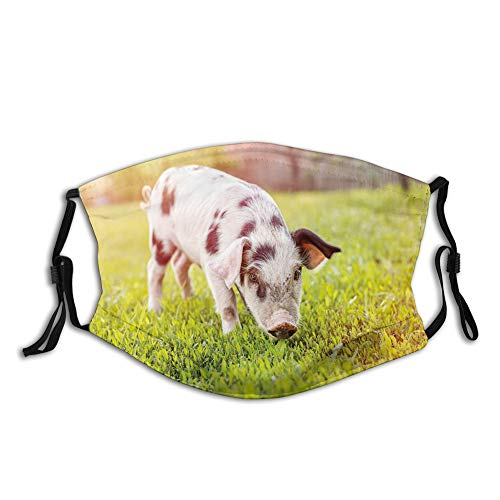 Face Mask Reusable Washable Masks Cloth for Men and WomenPhoto of Lovely Little Baby Pig with Spots Walking on Grass