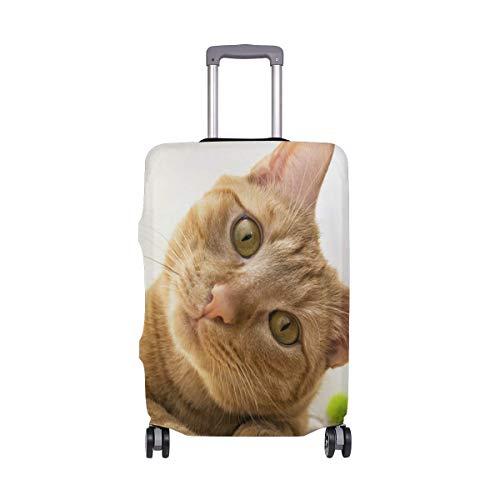 El Gato Anaranjado inclina su Equipaje Travel Travel Choice de Head Head con Ruedas giratorias Maleta con Equipaje de 24 Pulgadas