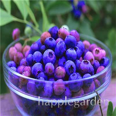 Bloom Green Co. Vente! 100 Pcs/sac bonsaïs aux bleuets comestibles de plantes fruitières Heirloom Bio Nain Blueberry Bonsaï Plante en pot pour jardin: 10