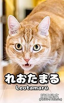 [猫田晃広, hayatobell]のれおたまる: 可愛すぎて癒される~マンチカン茶トラ猫の写真集